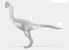 Rinchenia mongoliensis by ZEGH8578