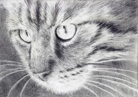 ACEO - Cat in the Window by StressyBessy
