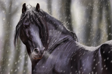 Snow Friesian by TheCookieAnnie