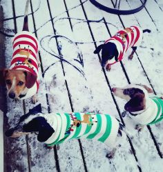 Mu puppies in there Christmas sweaters! by VioletTutu