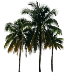 Palm Trees Precut Stock 1 by DLR-Designs