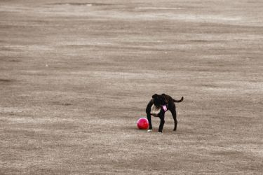 Ball licker by CitizenJustin