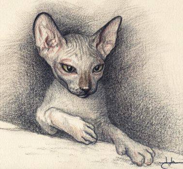 Sphynx by Ankhes-Nur