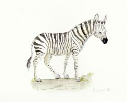 Zebra by Louisetheanimator