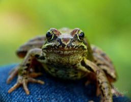 Cute Water frog by TheFunnySpider