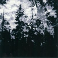 Holga Trees by keatonjohnson