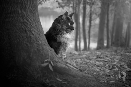 Photoshoping my cat into the wild by cune-roos