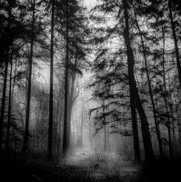 Black Forest by ulivonboedefeld