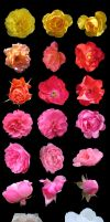 GIMP Rose Brushes Collection by The-Bardess