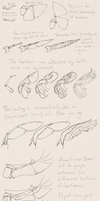 Scribbly wing pose tutorial by camelpardia
