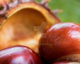 Conkers by domwlive