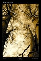Branches of Life by jimeh