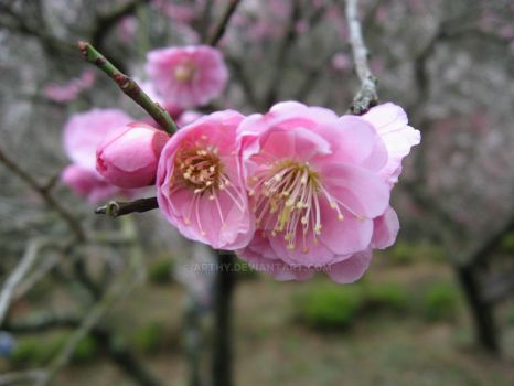 Late Winter Plum by arthy