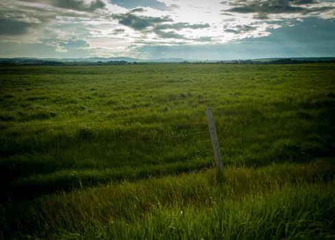Field by alexettinger