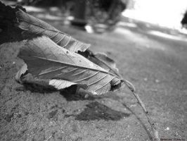 dead leaf by tiberiunedelea by Ro-nature