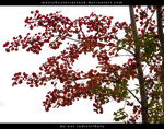 Aspen Autumn Foliage Cut Out by ManicHysteriaStock