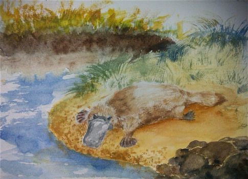 Platypus No 2 by noomisan