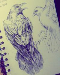Crow Studies 1 by NesoKaiyoH