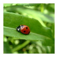 Ladybird, come on down by MC-blue