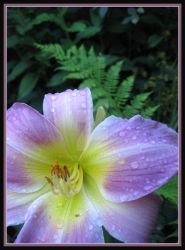 daylily fern by willowleaf