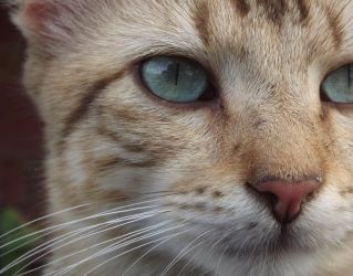 Eye of the Cherokee by TheCrazyCatWhisperer
