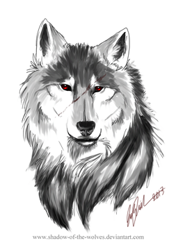 Sketch - wolf's eyes by Shadow-of-the-Wolves