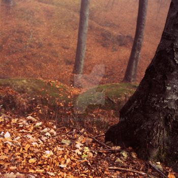 woods 2 by StetoCina