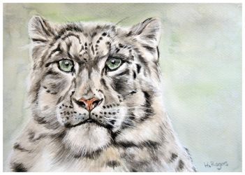 Snow Leopard 2 by Helenr251