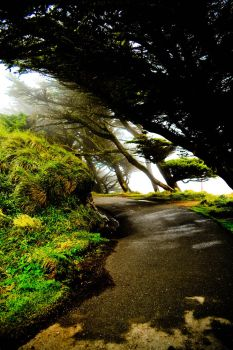 Point Reyes - Trees 2 by xdgrace