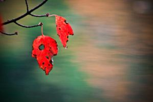 red autumn II by Photograph-er