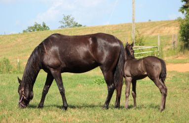 Mare and Foal 33 by MountainViewStock