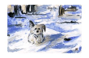 Puppy in snow by maxine