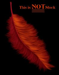 Feather of the Phoenix by RaNuit