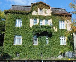 Ivy House #00030 CC Free Stock by PeterKmiecik