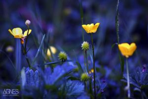 Blue and Yellow by AgnesBPhoto