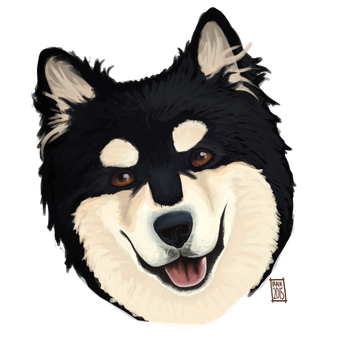 Finnish Lapphund by Iraik
