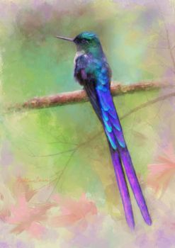Violet-tailed Sylph by KathleenCasey