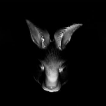 Return Of The Rabbit pt.2 by RabbitFromMars