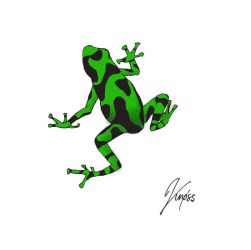 dart frog by Demenin