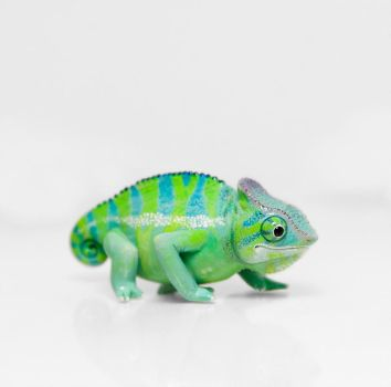 Chameleon Figurine by RamalamaCreatures