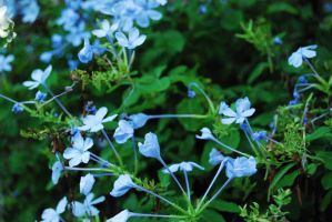 Flowers: Blue by Stevieberg