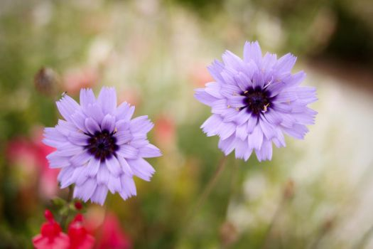 Concentric Petals by smoanwnet