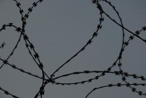 Barbed Razor Wire by TomatoSource
