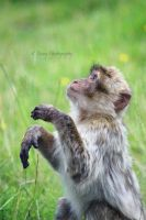 Monkey by KAMEPhotography