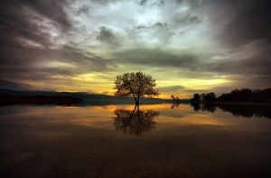 Twin tree by Chris-Lamprianidis