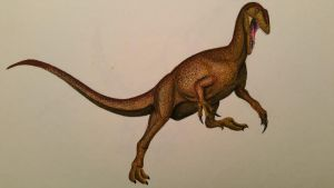 australovenator wintonensis by spinosaurus1