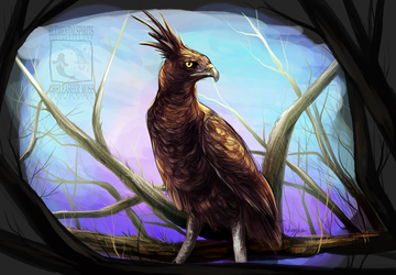 Long crested eagle by ElementalSpirits