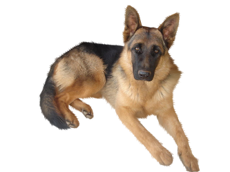 Gsd PNG by ScyllaWolf