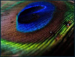 color's peacock 2 by talya89