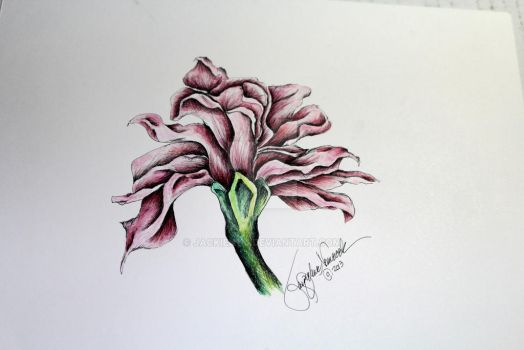 Pink Carnation by jackien114